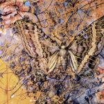 """Black Witch 1996 (24"""" x 28"""")"""
