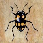 "Fungus Beetle 2007 (6"" x 6"")"