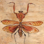 "Praying Mantid 2007 (6"" x 6"")"