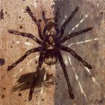 """Tarantula 2005 (7"""" x 7"""")"""