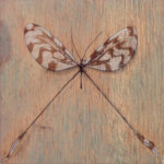 """Thread-Winged Lacewing 2009 (6"""" x 6"""")"""