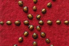 cropped-Ladybugs-2008-5-x31-e1359307251918